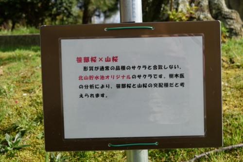 DSC_6489_北山ダムDSC_6489