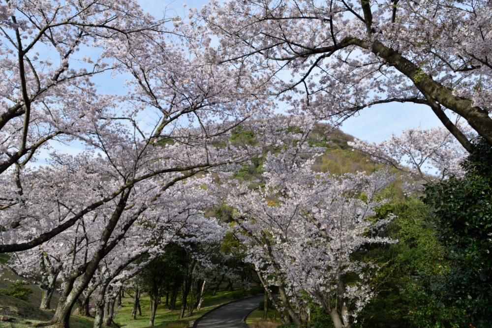 DSC_6542_甲山と桜DSC_6542