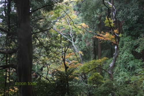 2015.11.15高尾山 18