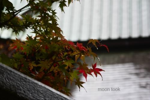 2015.11.15高尾山 16