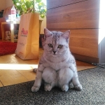 sitting-cat-13.jpg