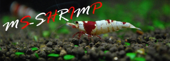 MS-SHRIMP blog banner(1100×400)