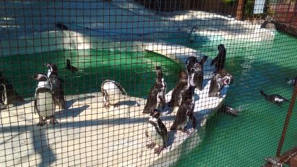 ブログ201510大阪_016ペンギン