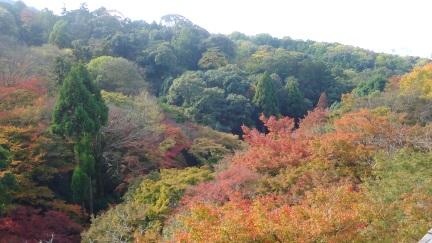 ブログ京都20151120_010