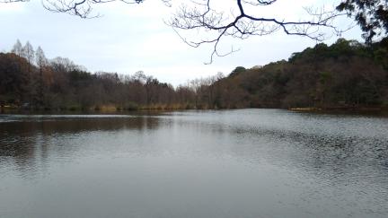 ブログ石神井公園001