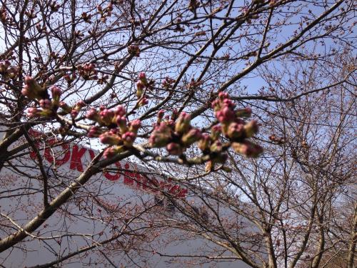 【2016.3.30】通勤風景・6
