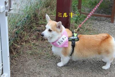 美犬さん♡