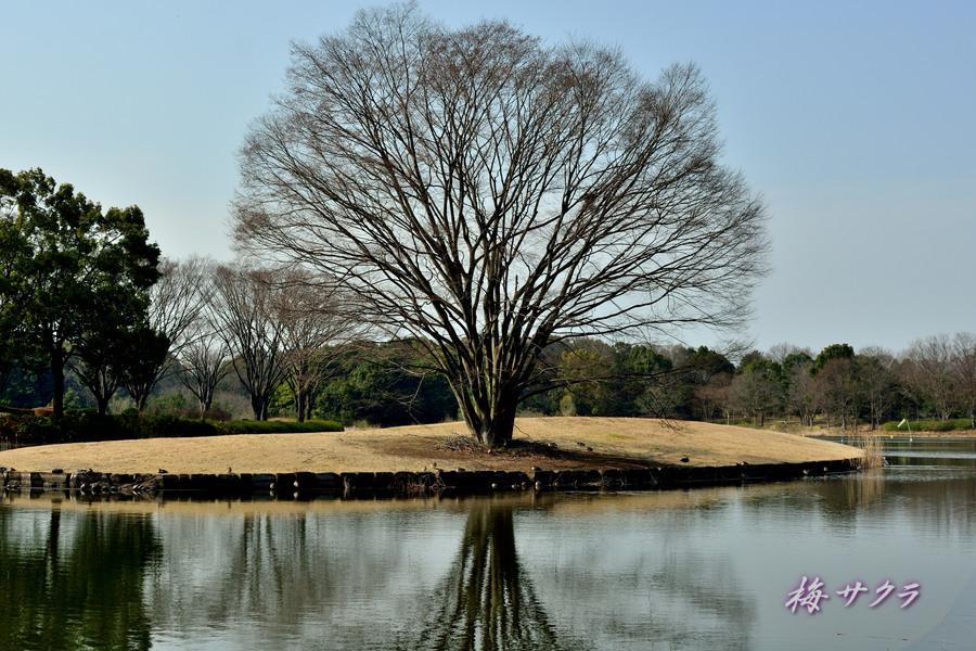 昭和記念公園1(2)変更済