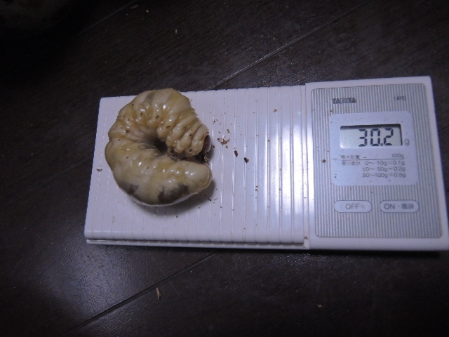 DSCN1048[1]