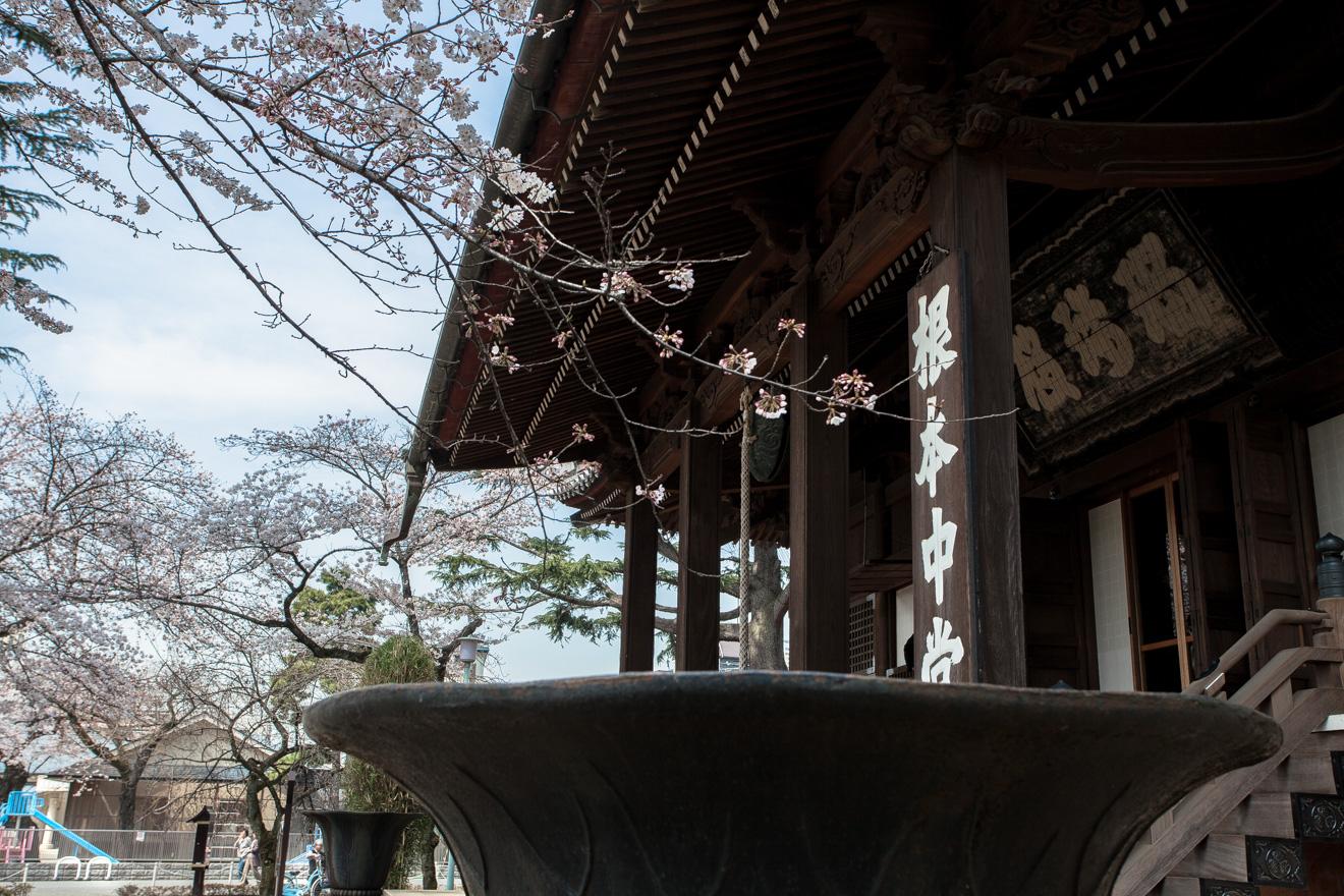 160331上野公園-5898
