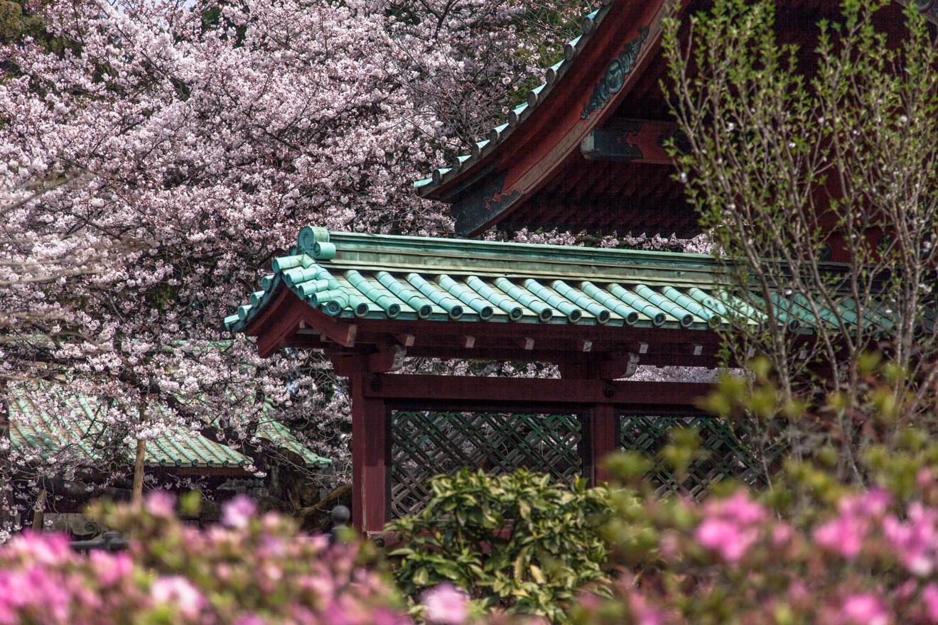 160331上野公園-5904
