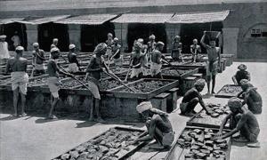 インドのアヘン工場①