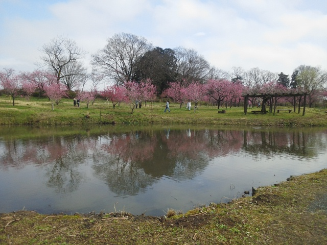 160319古河総合公園02