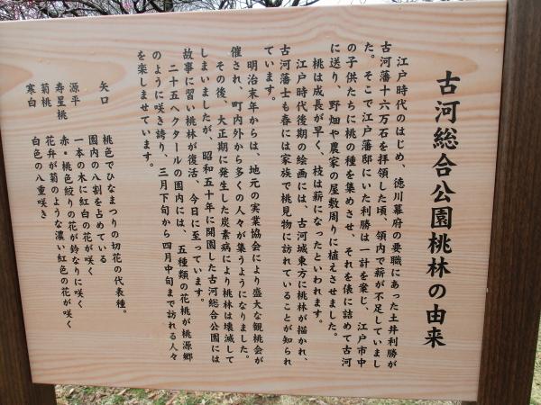 古河 桃祭り0004