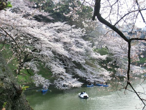 160331皇居 桜0001