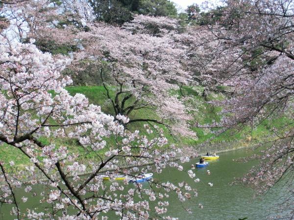 160331皇居 桜0010