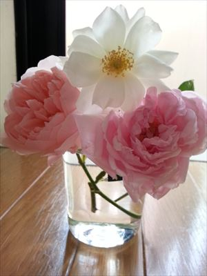 20151024秋バラたち02_R