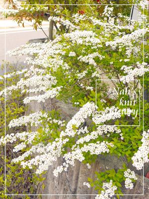 garden2016-21.jpg