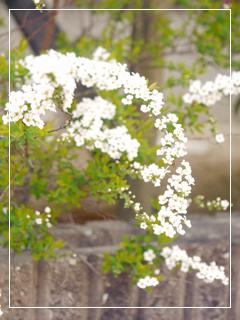 garden2016-22.jpg