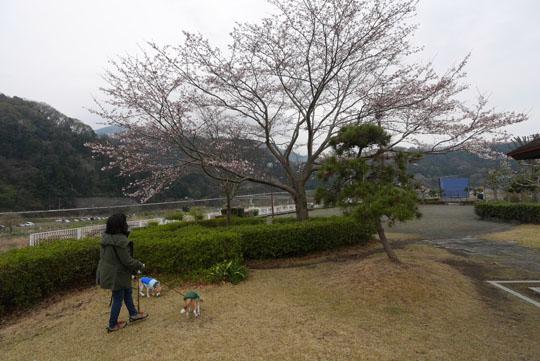 04朝の散歩