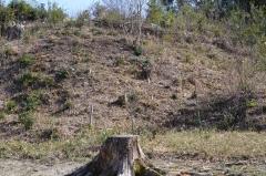 b皆伐区4年目の春