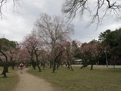 160306d_京都御苑4