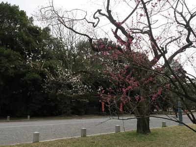 160306d_京都御苑6