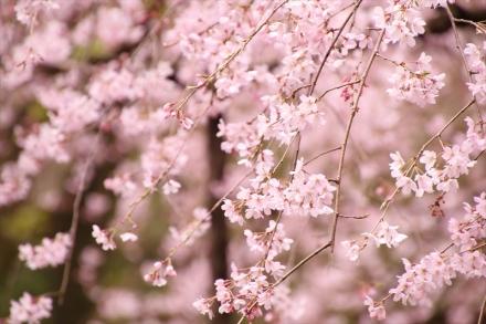 淡いピンクがかわいいですね