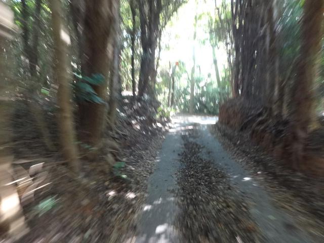 再び林道へ
