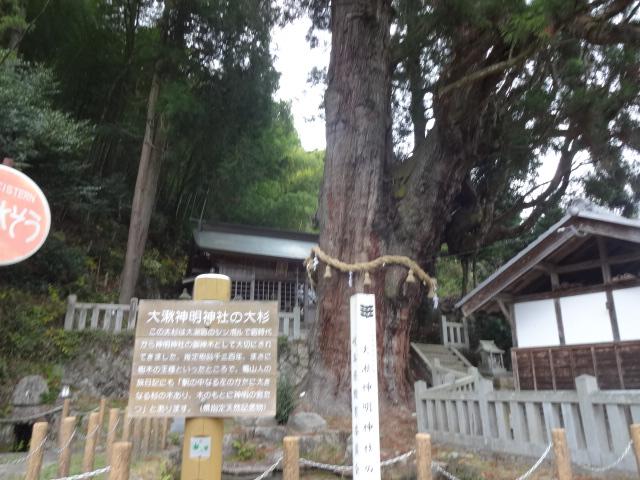 大湫神明神社の大杉