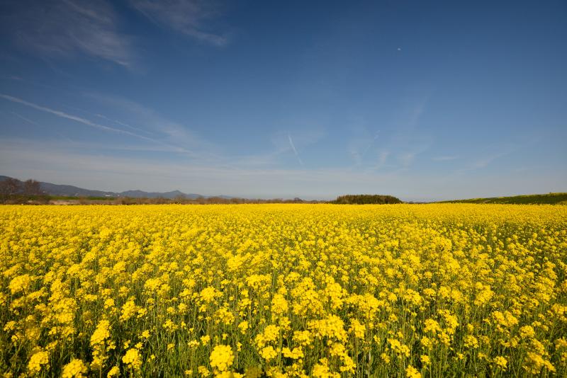 「春花の草原」 (徳島県)