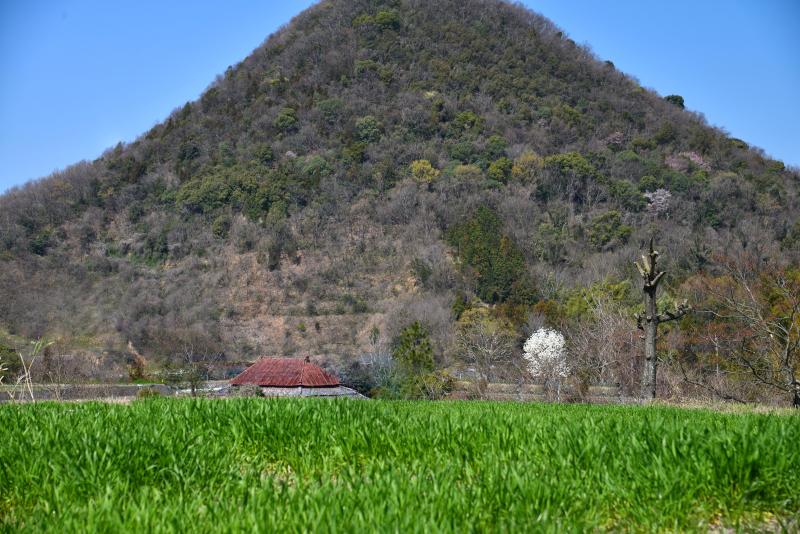 「春・里山」7 (香川県羽床)
