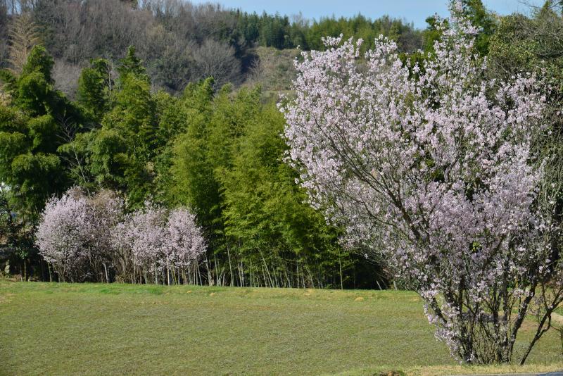 「春・里山」2 (香川県香川町)