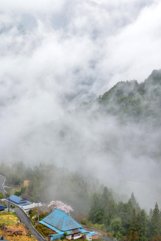 「霧中桜4」 (徳島県つるぎ町)