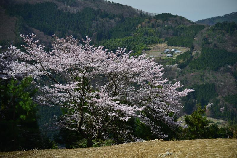 「山村に咲く」 (香川県まんのう町)