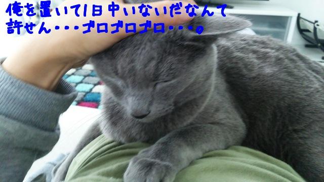 hcvkAOxin5Cug6g1446460047_1446460116.jpg