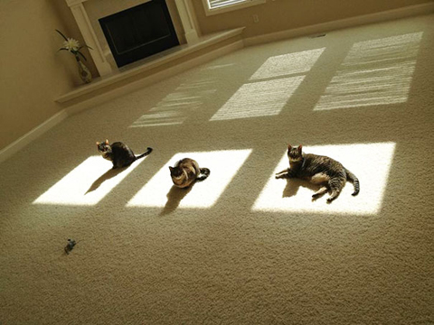 cats-enjoying-warmth-57__605.