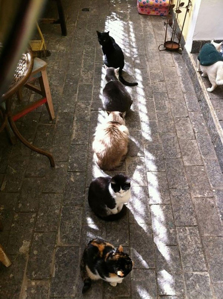cats-enjoying-warmth-58__605
