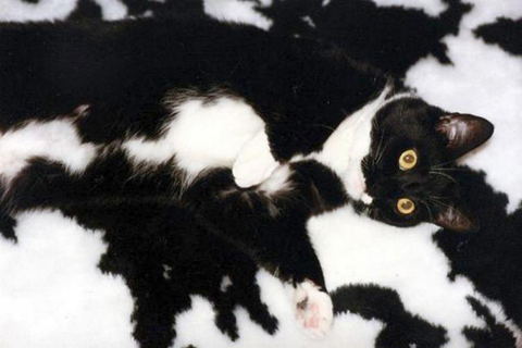 funny-camouflaged-cats-10.
