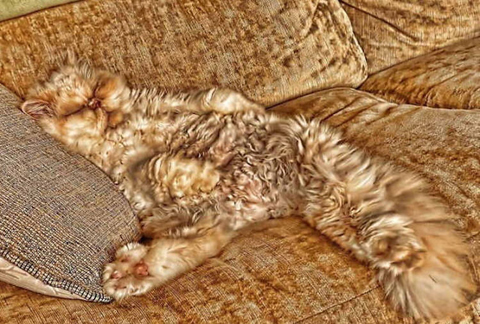funny-camouflaged-cats-25.