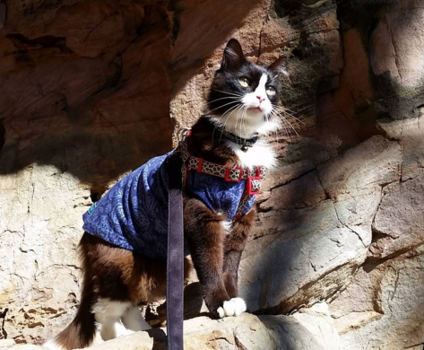 tuxie-cat-that-hikes