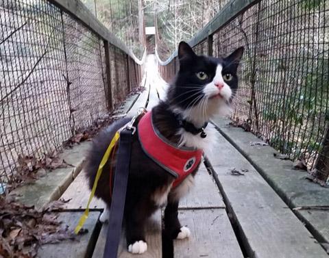 tuxie-hiker-cat