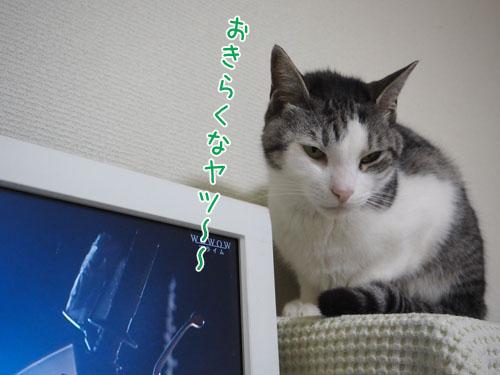 P3290008_2.jpg