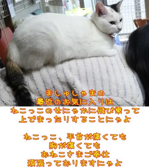 DSC_0032_20151113175056e08.jpg