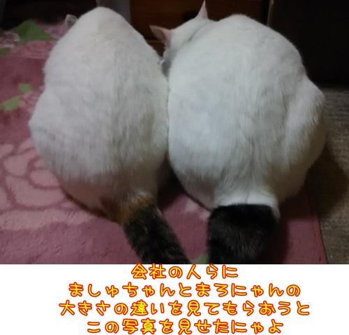DSC_02_20151205233501f73.jpg