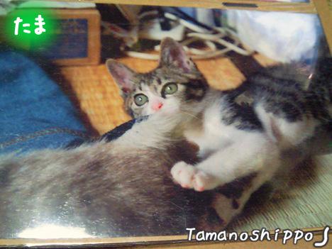 ガリガリな赤ちゃん猫(たま)