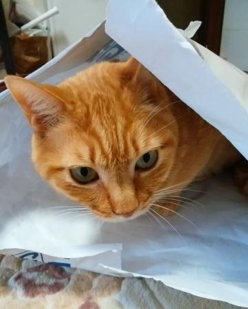 包装紙チェック2