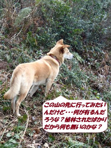 P3100606_convert_20160315080013.jpg