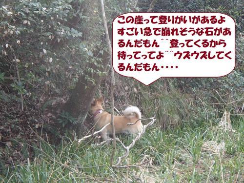 P3310794_convert_20160405101017.jpg