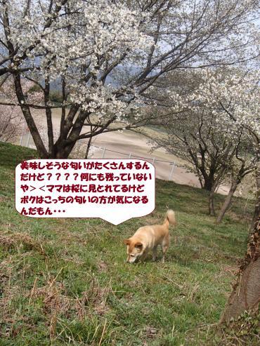 P4060862_convert_20160408094643.jpg